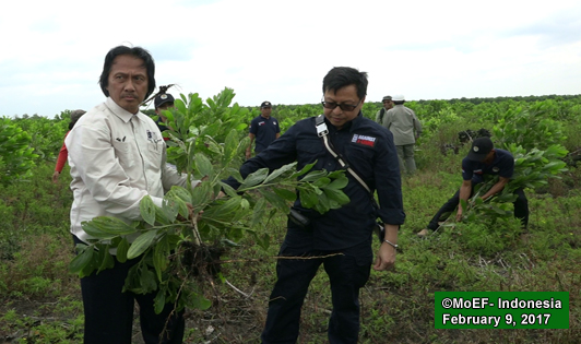 Symbolic removal of acacia marks new era of peat-related law enforcement