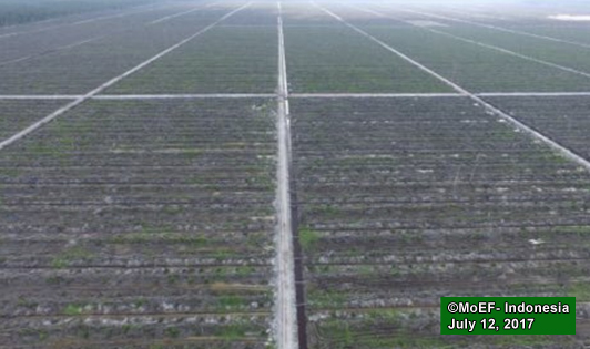 World's largest palm oil trader's supply chains linked to peat violations