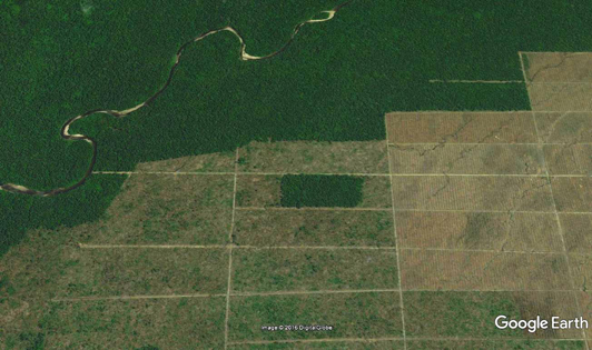 Market leader continues clearing of Papua's forests to achieve its business goal