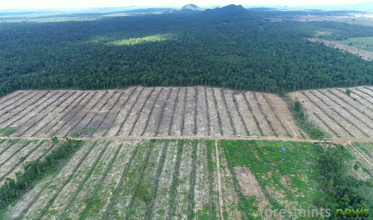 Sime Darby required to end any further HCS forest clearing